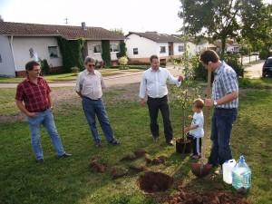 Ein Baum für Scheuern (2)